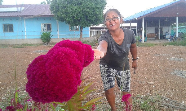 Growing beautiful flowers and super tasty fruit and vegetables is just one of the joys living in rural Thailand.