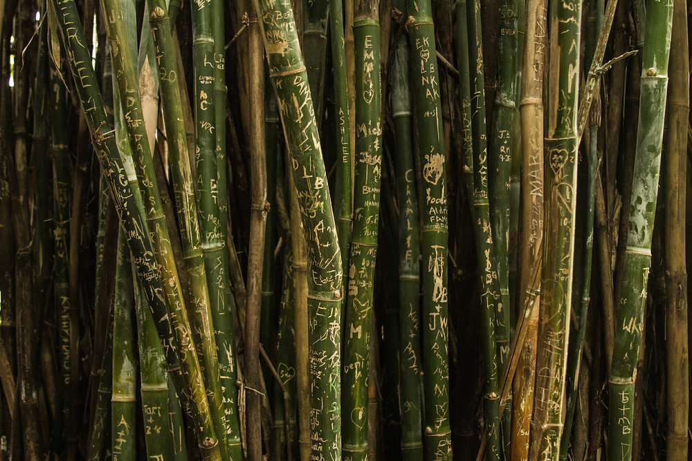 Writing on live bamboo plants.