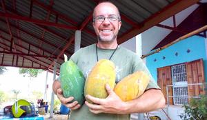 Growing organic papaya on our farm in Thailand.
