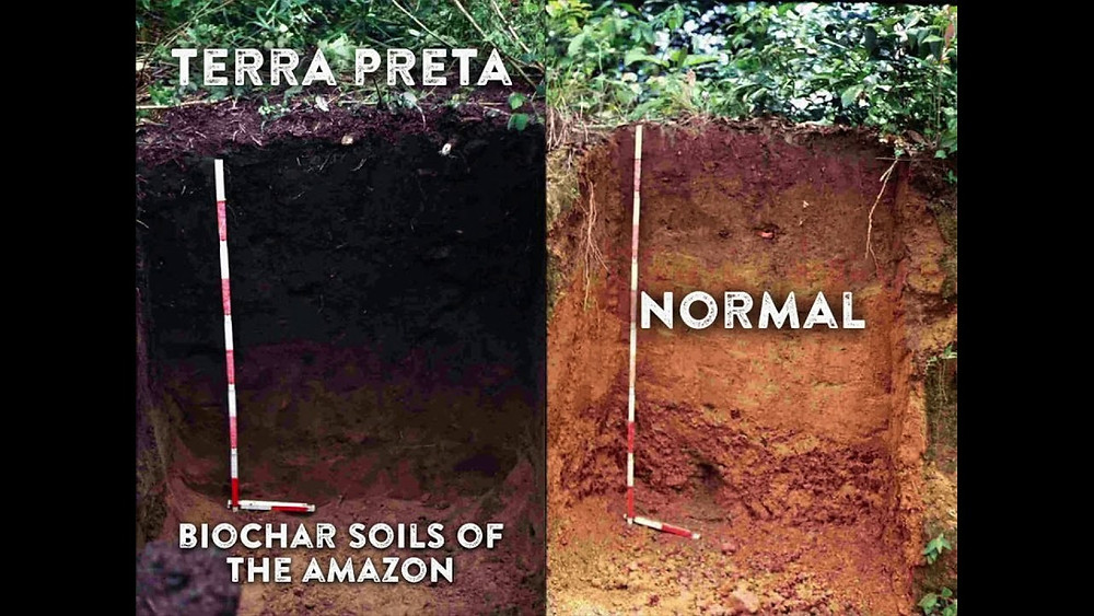 Terra Preta soil cross-section