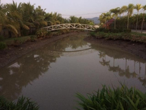 Growing and selling fish in Thailand: Pond draining and selling tilapia