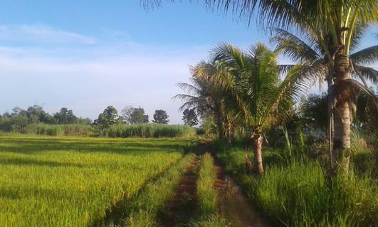 rice farm_edited.jpg