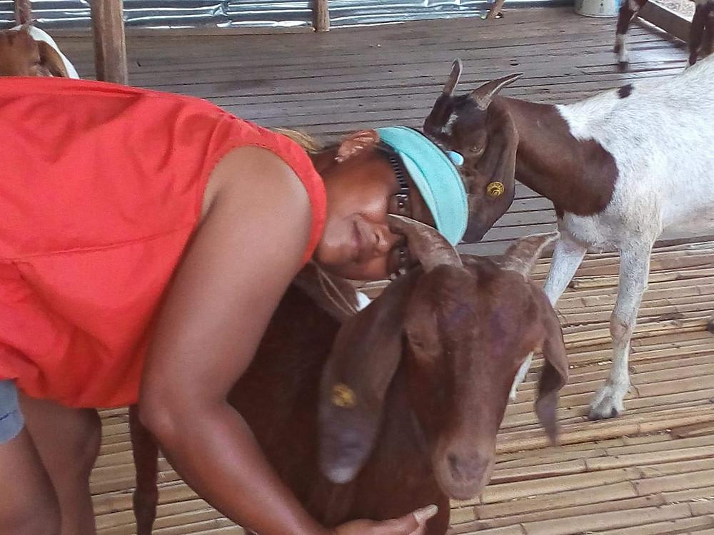 a goat farm in thailand