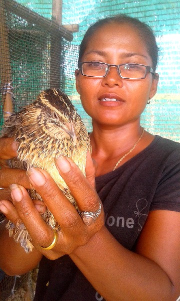 Holding an adult Japanese quail on our farm in Thailand.
