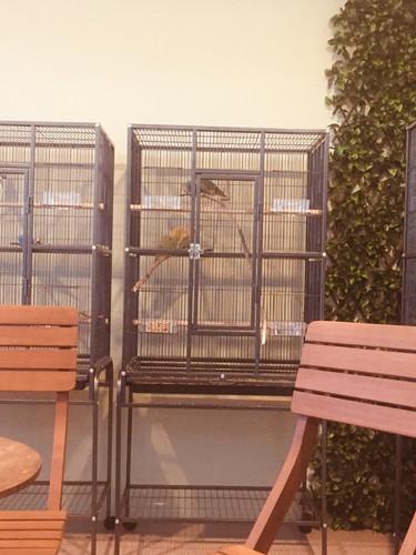 Bird Room 02