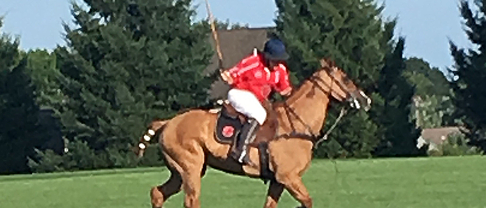 ElkMountainEstate_polo.png