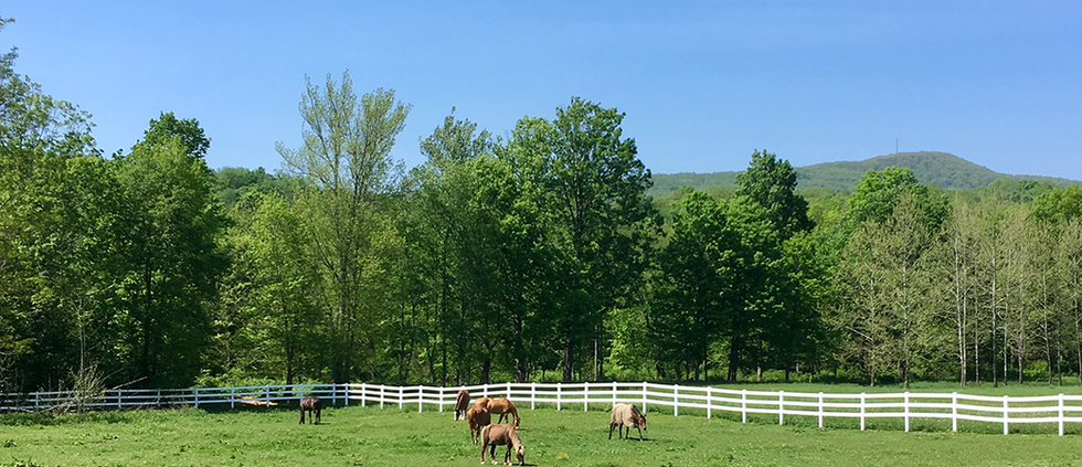 ElkMountainEstate_Manor_polohorses1.png