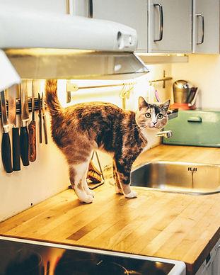 櫃檯上的貓
