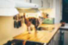 A cat has jumped up on to a kitchen counter
