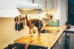 Chat sur le comptoir