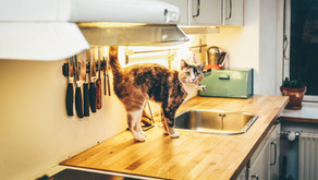 Beware of Magazine Kitchens