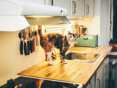 Are Daily Visits for Cats Necessary?