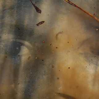 Watching 3 © Gillian Allard  Concrete photo portrait submerged and reshot in the River Gipping