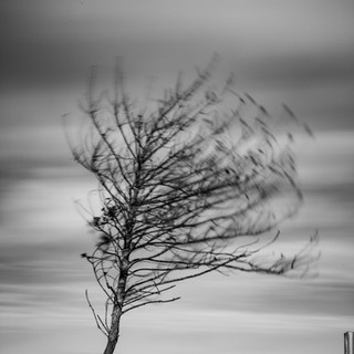 Small Tree - Stonham Aspal, Suffolk 2021 © Gillian Allard  This image is available in the Print Shop as a framed or unframed image.