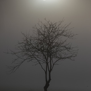 Foggy Sun - Stonham Aspal, Suffolk © Gillian Allard  This image is available in the Print Shop as a framed or unframed image.