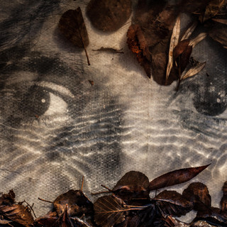 Watching 2 © Gillian Allard  Concrete photo portrait submerged and reshot in the River Gipping