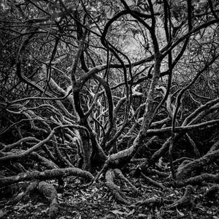 Wild Tree - Dunvegan - Isle Of Skye 2001 © Gillian Allard  Drum Scan - HP5 medium format film  Available in the Print Shop as a framed or unframed fine art print.