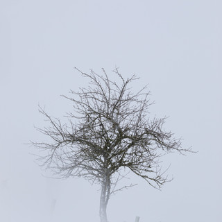 Winter Tree - Stonham Aspal , Suffolk 2021 © Gillian Allard  This image is available in the Print Shop as a framed or unframed image.
