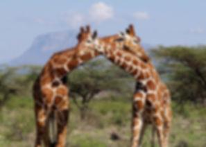 Kenia 4.jpg