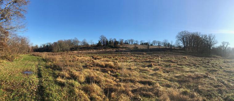 Meadow in Ellis Wood Park.jpg