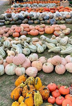 pumpkins-2.jpeg