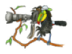 jpeg - color - Tucan.jpg