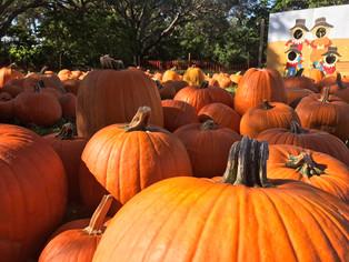 Hello Autumn. You're beautiful 🍂🍁🍃