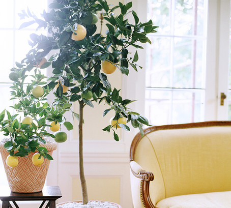The Plant That'll Make it Feel Like Summer in Your Home All Year Long