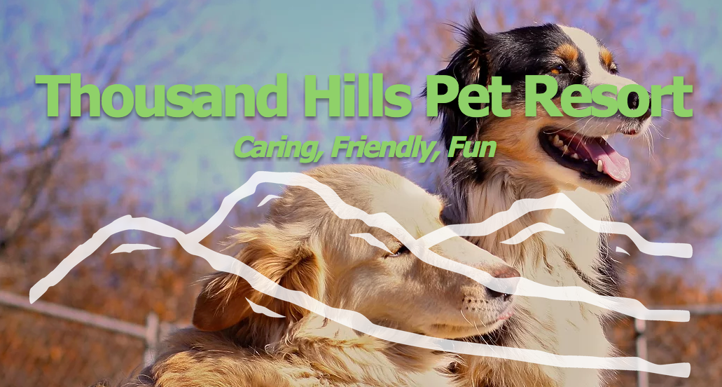 Pet Boarding, Daycare, and Training | Thousand Hills Pet