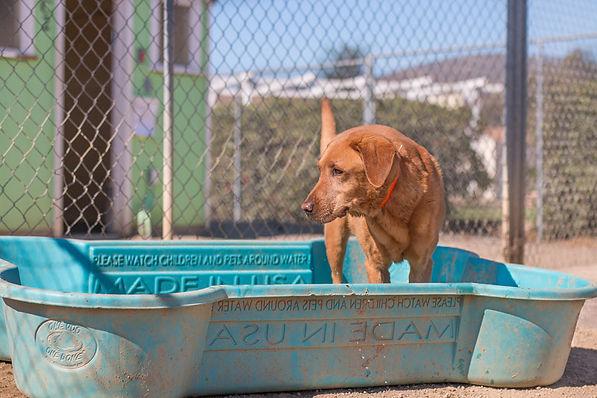 boarding dog in play yard pool FAQ