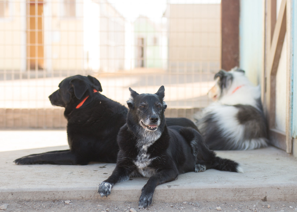 Senior Dogs in Yard