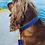 Thumbnail: Argus Collar pavadėlis šunims