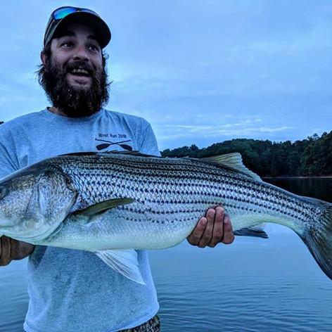Carters lake striped bass