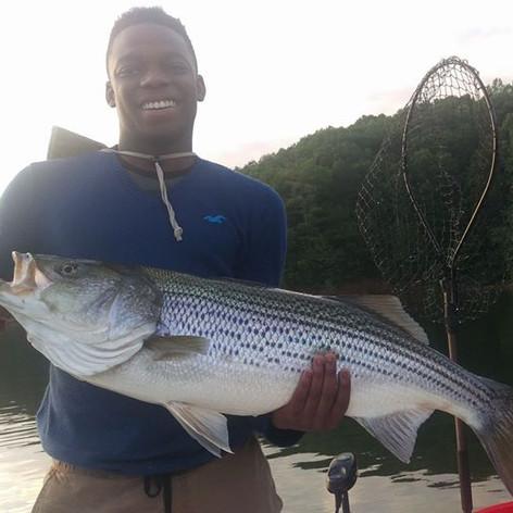 striped bass fishing carters lake