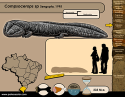 Compsocerops sp
