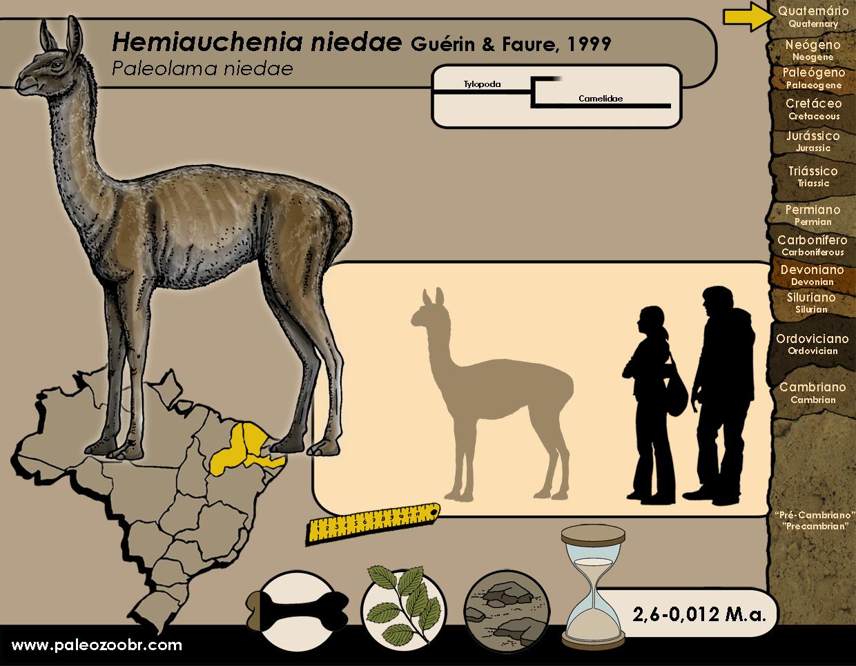Hemiauchenia niedae