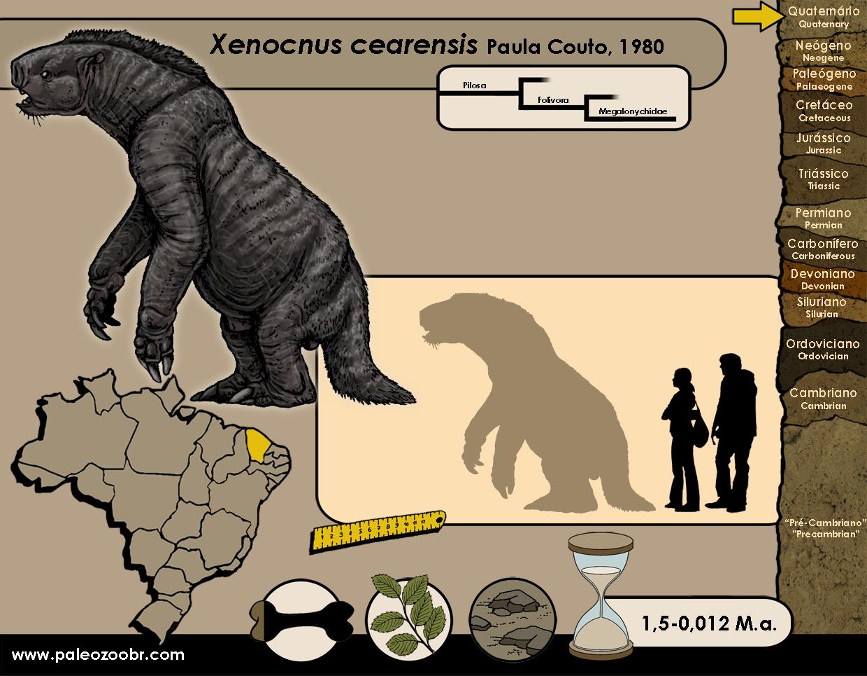 Xenocnus cearensis