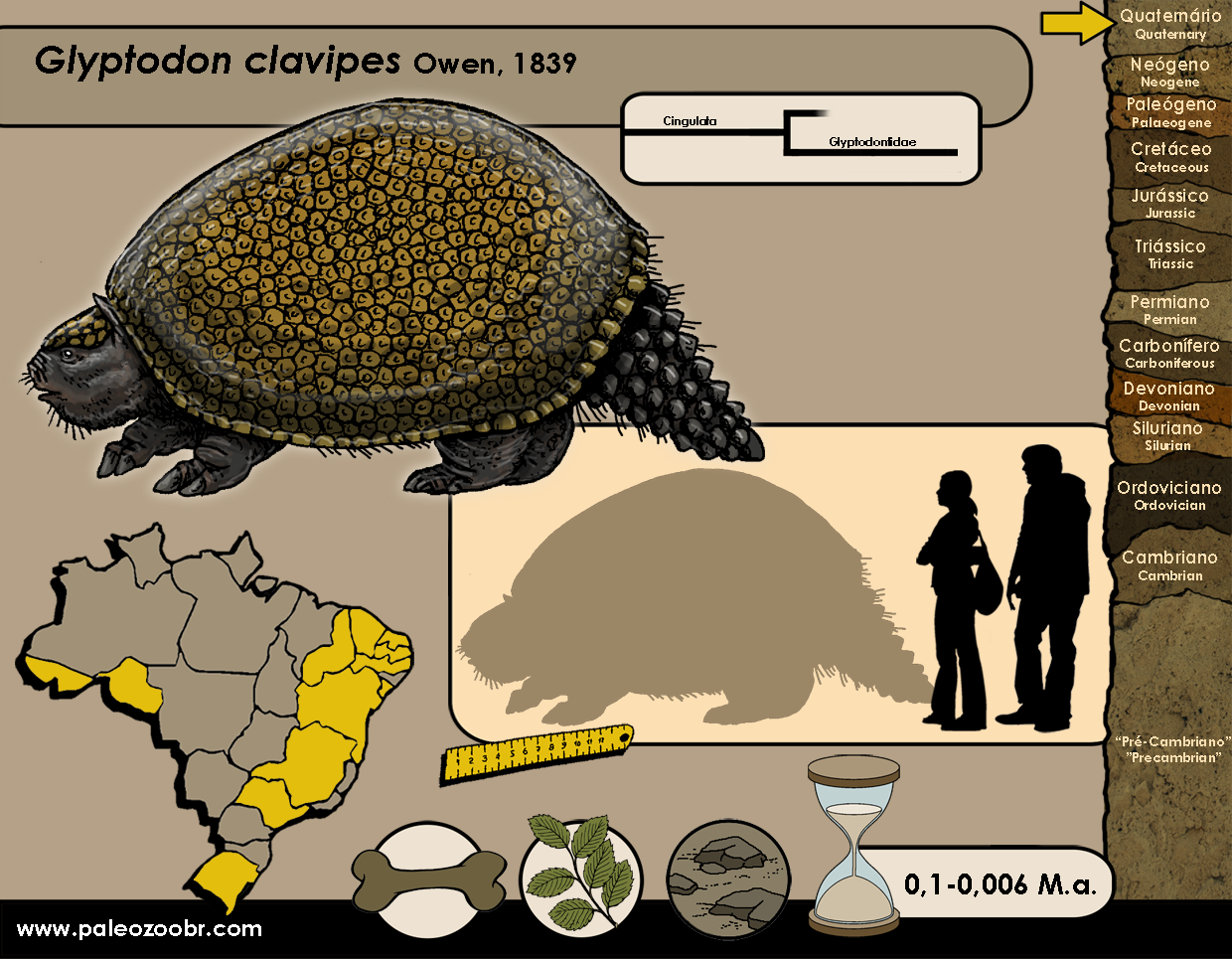 Glyptodon clavipes