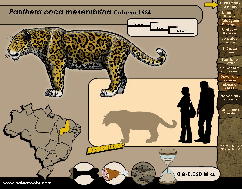 Panthera onca mesembrina