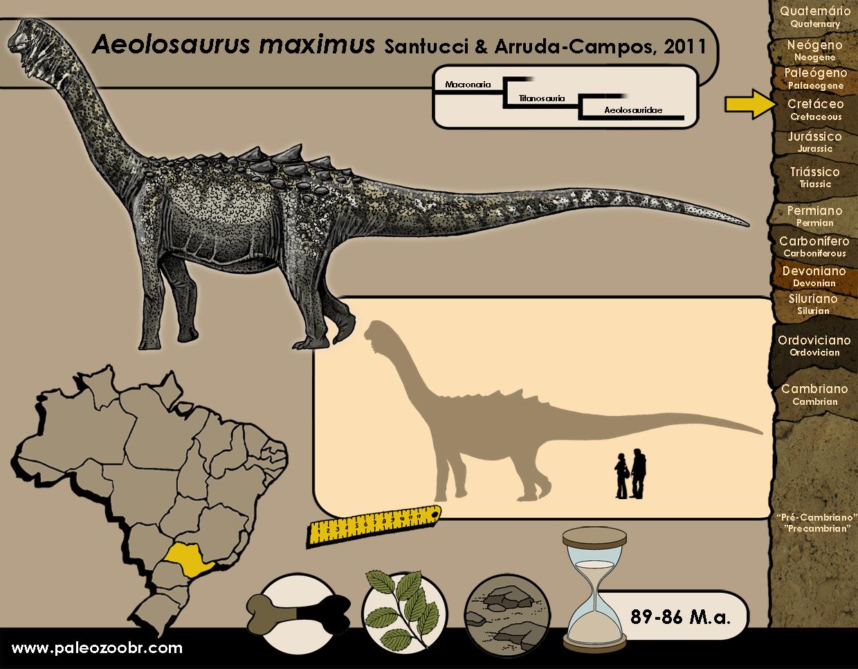 Aeolosaurus maximus