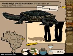Inaechelys pernambucensis