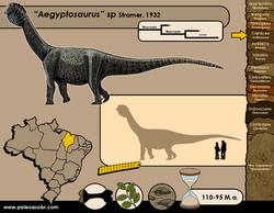 Aegyptosaurus sp