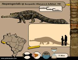 Hesperogavialis sp