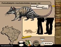 Protodidelphis mastodontoides