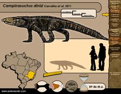 Campinasuchus dinizi