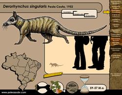 Derorhynchus singularis