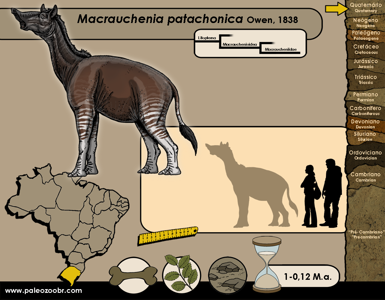 Macrauchenia patachonica