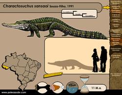 Charactosuchus sansaoi