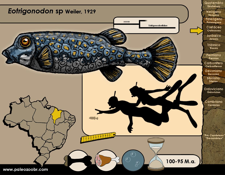 Eotrigonodon sp