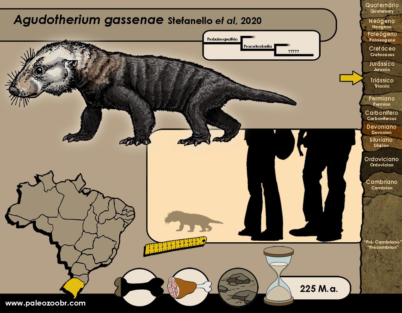 Agudotherium gassenae